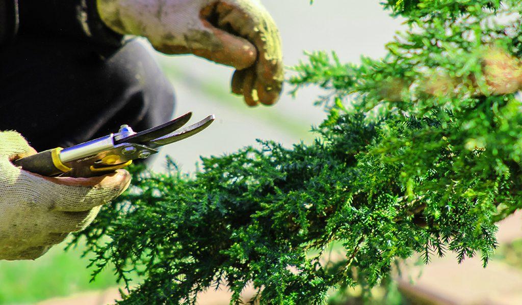 ccategoria forbici per il giardino